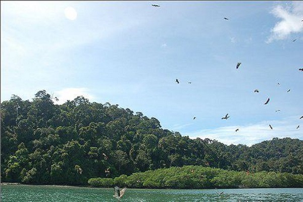 D Tour Kuale Selangor Eagle Feeding Tour